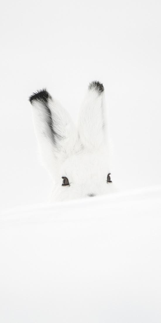 Vincent Munier Solitudes Arctique © Vincent Munier